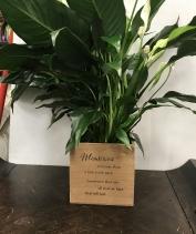 Memory box plant