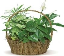 4 Plant Dish Garden